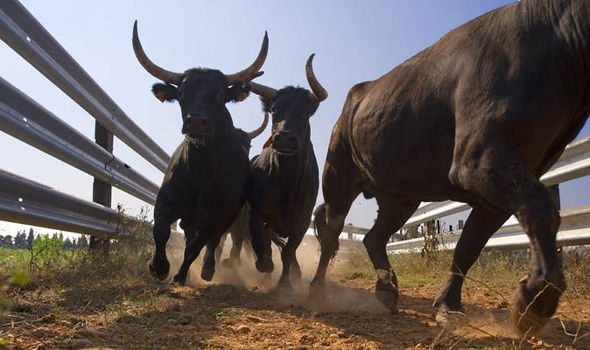 running-bull-621574